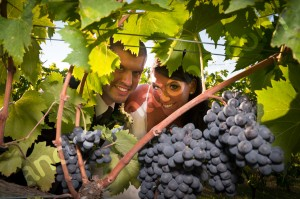 Vineyard grapes and green with the newlyweds in Italy