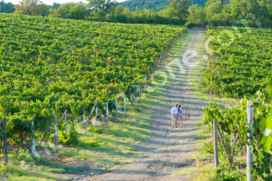 Kissing among the vineyard