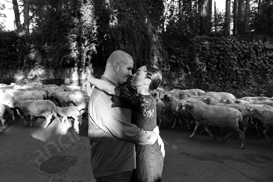 Candid in front of sheeps running on urban road in Italy