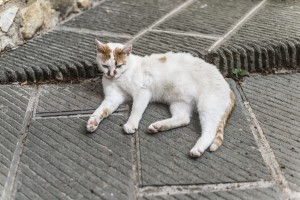 A Tuscan cat dozing off