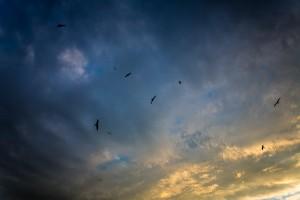 Deep blue sky with birds flying the air