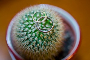 Wedding rings macro on porcupine