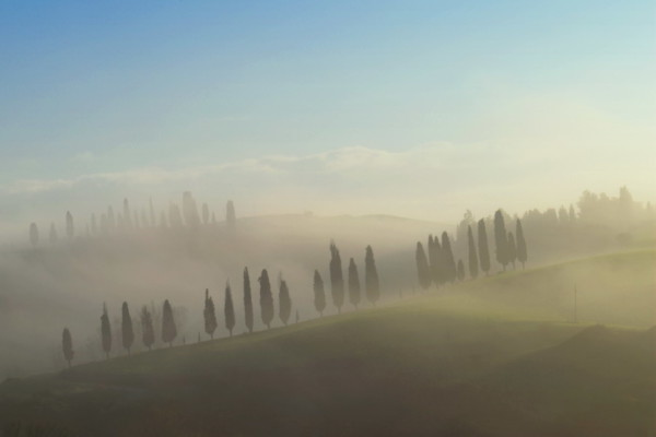 Cypress trees in early morning fog Tuscany Italy