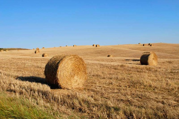 Hay bales in a tuscan field