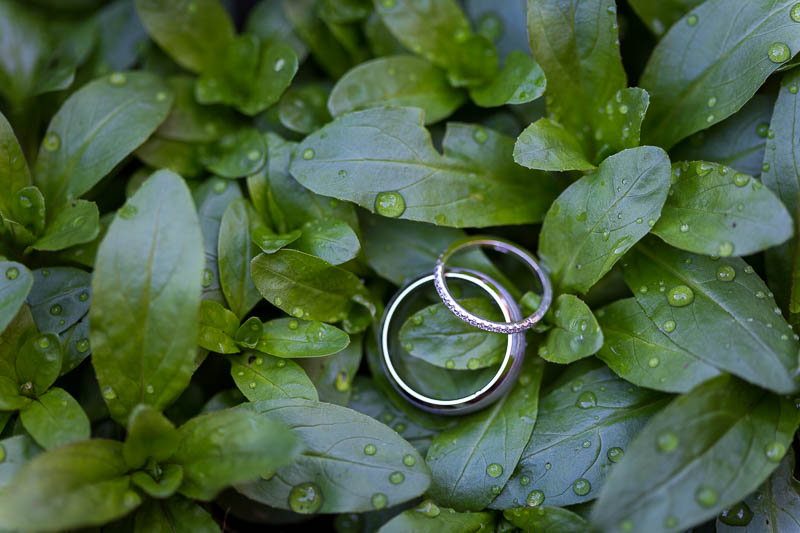 Wedding rings photographed on green plants