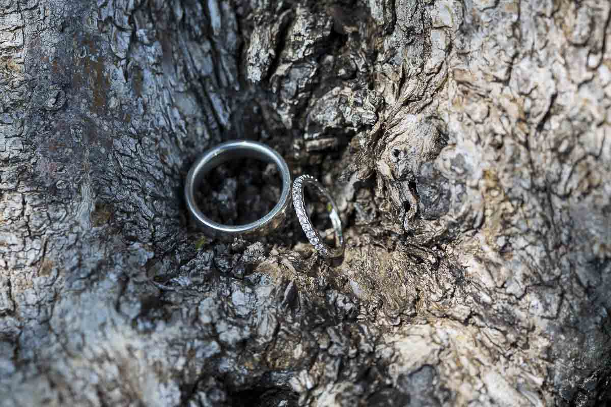 Wedding rings image on the bark of a tree