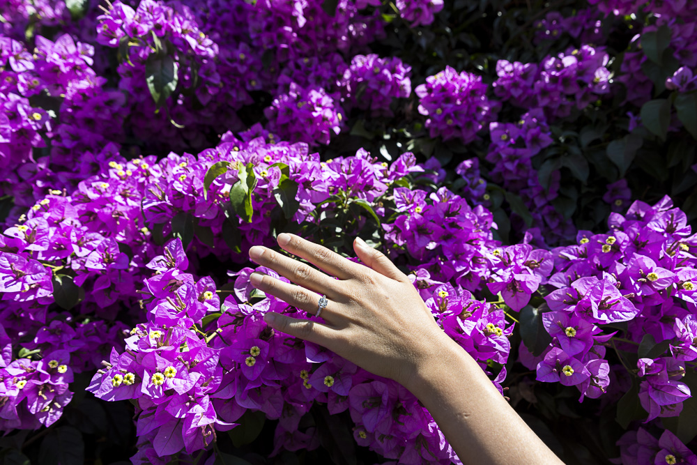 Engagement ring image against purple flowers