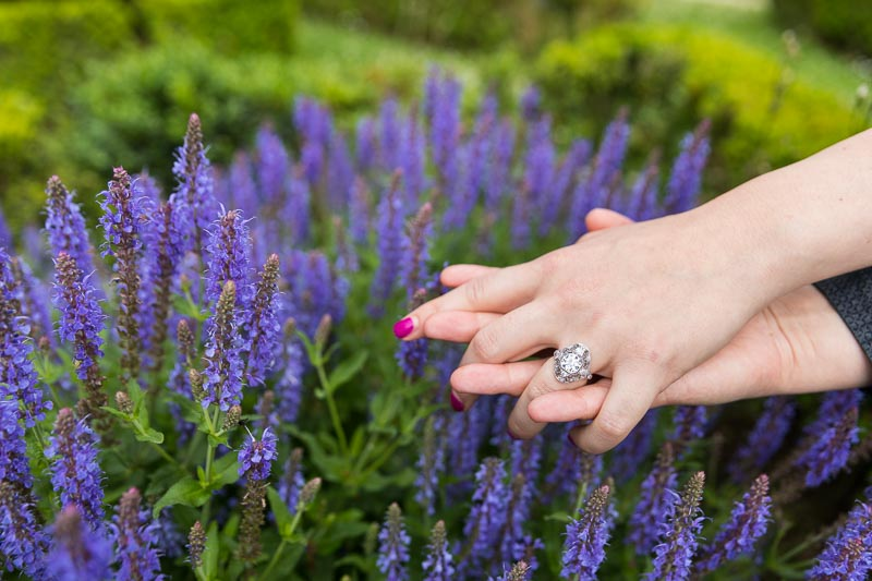 engagement ring close up photographed by lavanda purple flowers